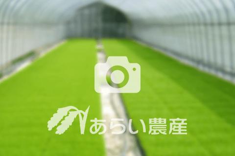 あらい農産のブログ画像
